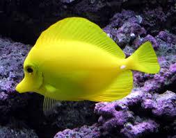 y fish